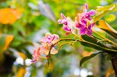 foto of orquidea  - A beautiful orchid in the room interior - JPG