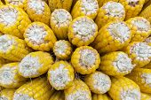 picture of corn-silk  - Image of yellow corn background  - JPG