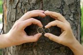 image of gases  - Two hands with wedding rings hugging trunk large tree - JPG