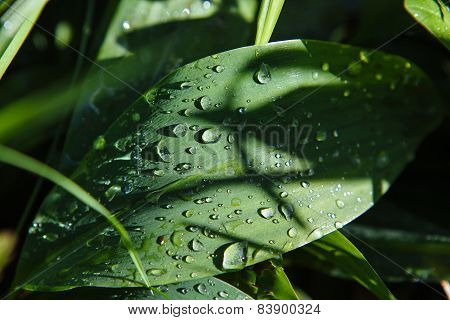 After the rain drops on a plants