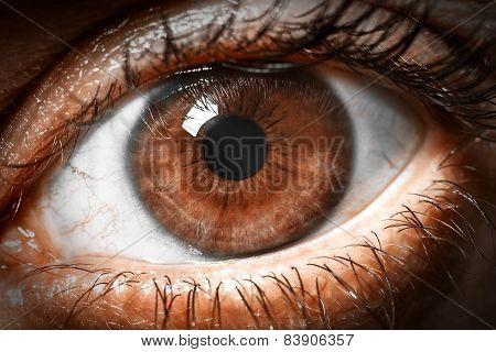 Brown human eye extreme macro shot.