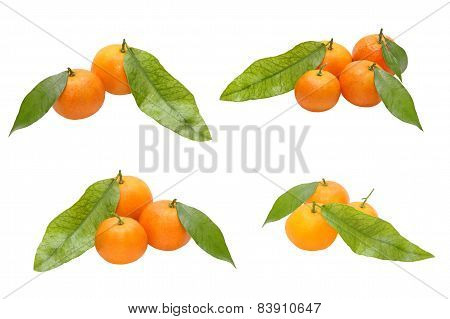 Set Of Ripe Mandarines And Green Leafs.isolated.