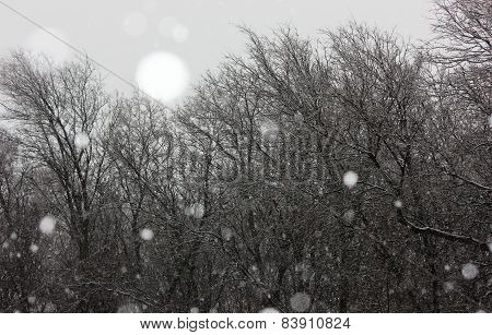 Snow Falling in the Trees