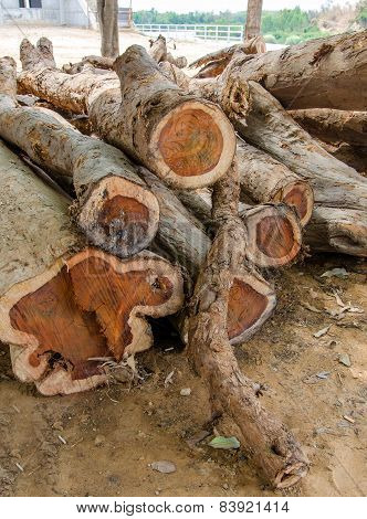 Rosewood of firewood logs. conserve of wood