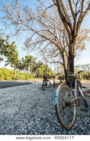 Bicycles trip