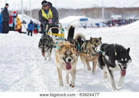 Kamchatka Sled Dog Race Beringia