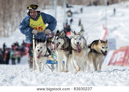 Kamchatka Dog Sledge Racing Beringia