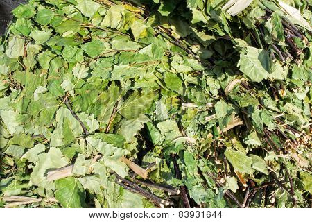 Birch Leaves For Sauna