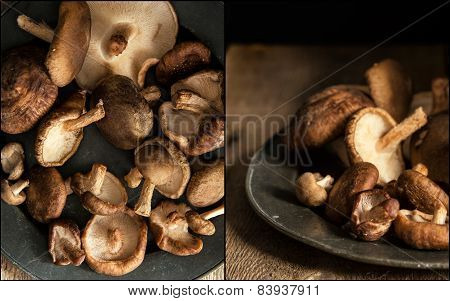 Compilation Of Images Of Fresh Shiitake Mushrooms In Moody Natural Light Setting With Vintage Retro