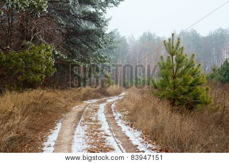 Winter Road And Forestroad, Winter, Snow, Forest, Country, White, Landscape, Snowy, Cold, Ice, Frost