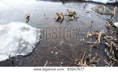 Icy swamp