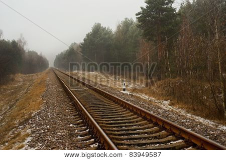 Railway In The Woods
