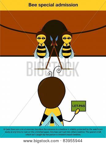 Bee Infographics (admission)