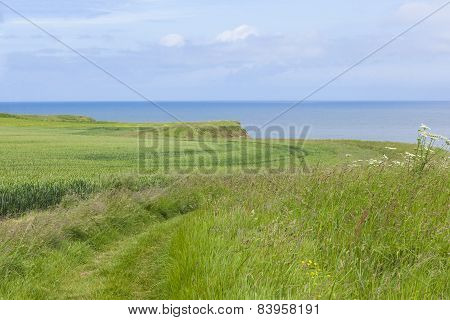 Coastal Footpath At Flamborough Head, Yorkshire, Uk