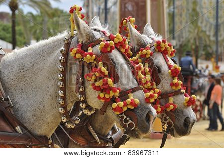 Horses Decked In Fair, Jerez De La Frontera