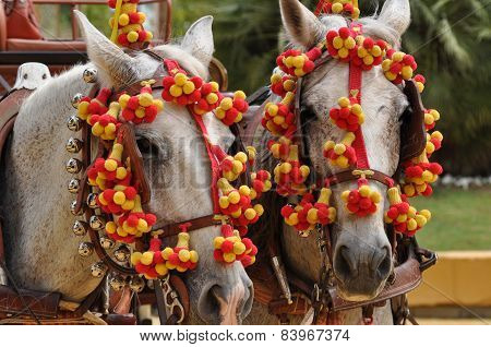 Horses Decked In Fair