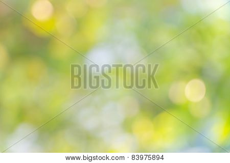 Nature Bokeh, Blurred Background