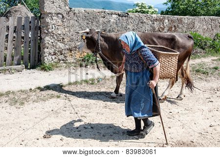 Unidentified woman with her cow