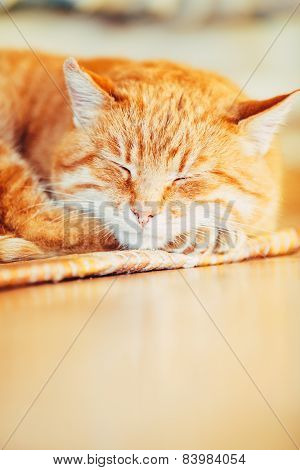 Peaceful Orange Red Tabby Cat Male Kitten Sleeping In His Bed On