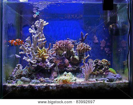 Fish And Coral Tank