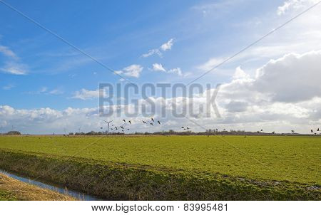 Geese flying over a sunny field in winter
