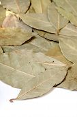 picture of bay leaf  - Close - JPG