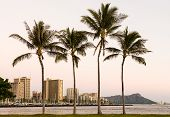 pic of waikiki  - Panorama of the skyline of Waikiki at sunset or dusk with yachts and boats in Ala Moana harbor and Hilton Hawaiian Village framing Diamond Head in Waikiki Oahu Hawaii - JPG