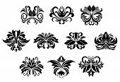 picture of tendril  - Black ornamental floral design elements with stylized flowers decorated bold leaves scrolls and curly tendrils isolated on white background - JPG