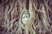 pic of budha  - Head of Buddha statue in the tree roots at Wat Mahathat Ayutthaya Thailand - JPG