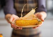 stock photo of corn cob close-up  - Close up on young housewife showing corn - JPG