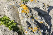 picture of lichenes  - Lichens on a rock grey rock on a sunny day - JPG