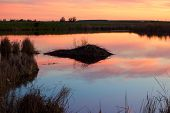 picture of beaver  - Beaver dam in a small pond at sunset - JPG