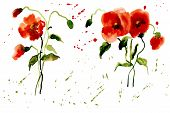 pic of poppy flower  - Flowers Poppies Red with Splashes of Watercolor for your Design - JPG