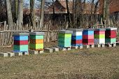 pic of honey bee hive  - Bee Hive boxes - JPG