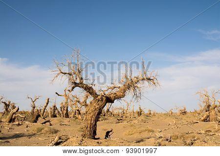 Dead Trees In Desert