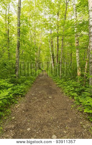 Trail In The Woods