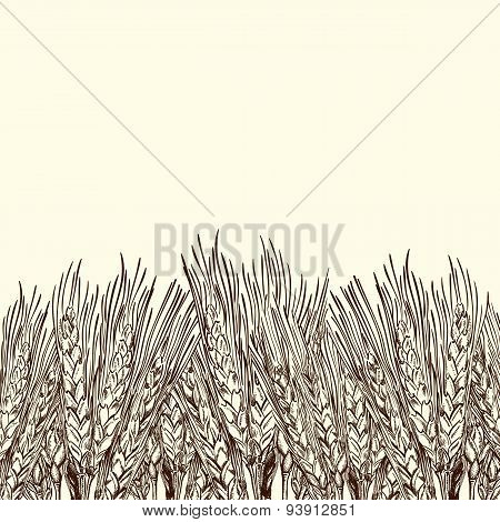 Engraved Wheat Background