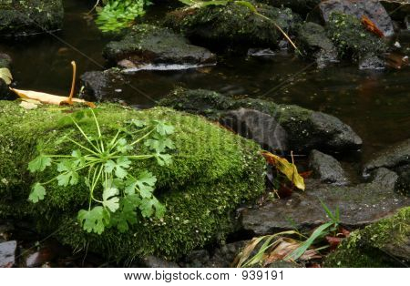 Plants And Moss