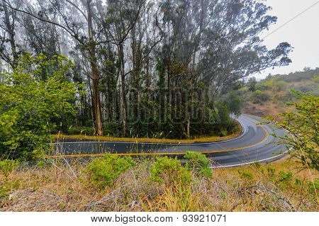 Wet Paved Road Winds By Eucalyptus Trees