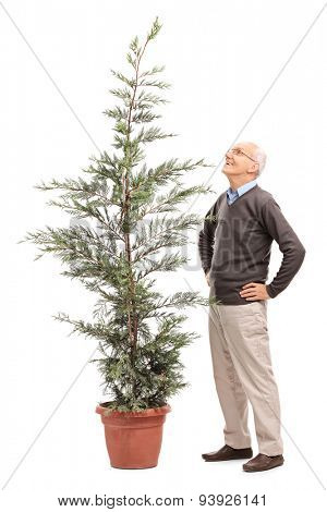Full length portrait of a cheerful senior man looking at a potted coniferous tree isolated on white background
