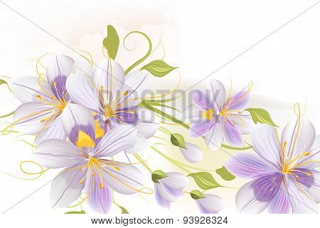 Clear Floral Background With Hyacinth Flowers