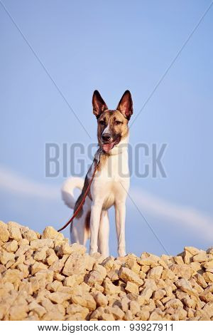 Domestic Dog On Filling Brick Against The Blue Sky.