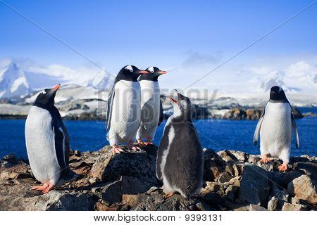Grupo de pinguins