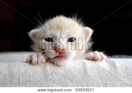 Tiny Orange Kitten Face