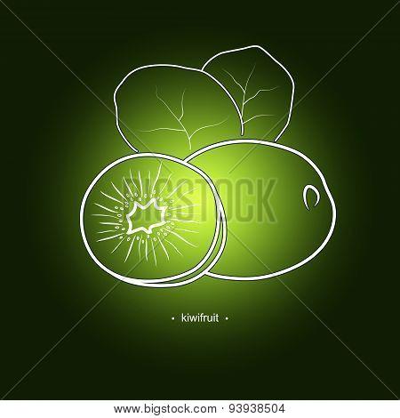 Image Kiwifruit In The Contours