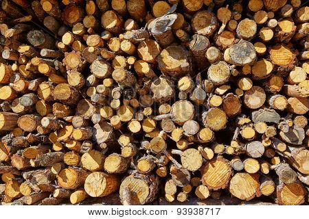 Firewood fire wood pattern texture in Spain forest