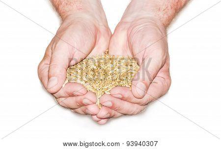 Handful Of Grain