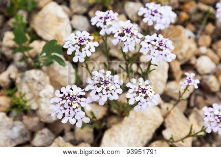 Beautiful Bright Yeauthentic Landscape Wild Delicate Flowers As Background For Design. Selective Foc