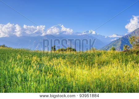 Green Meadow Of Annapurna Circuit, Nepal