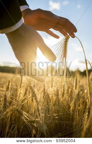 Man Cupping The Rising Sun And Wheat In His Hands